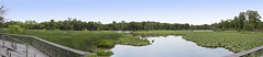Kenilworth Aquatic Gardens_Panorama2