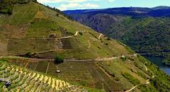 Doade (Lugo) - Ribeira sacra - viticultura heroica