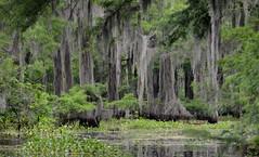 2017 louisiana swamps