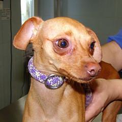 Cinque nuovi esemplari, pronti per l'adozione, ospitati nel Canile Sanitario