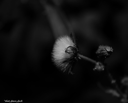 blackandwhite monochrome nature plant pointofview bw blackwhite