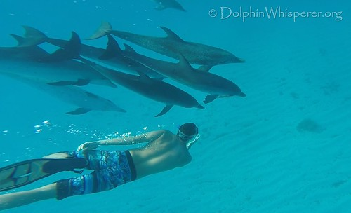 Dolphin Whisperers Soul Connections Bimini (1)