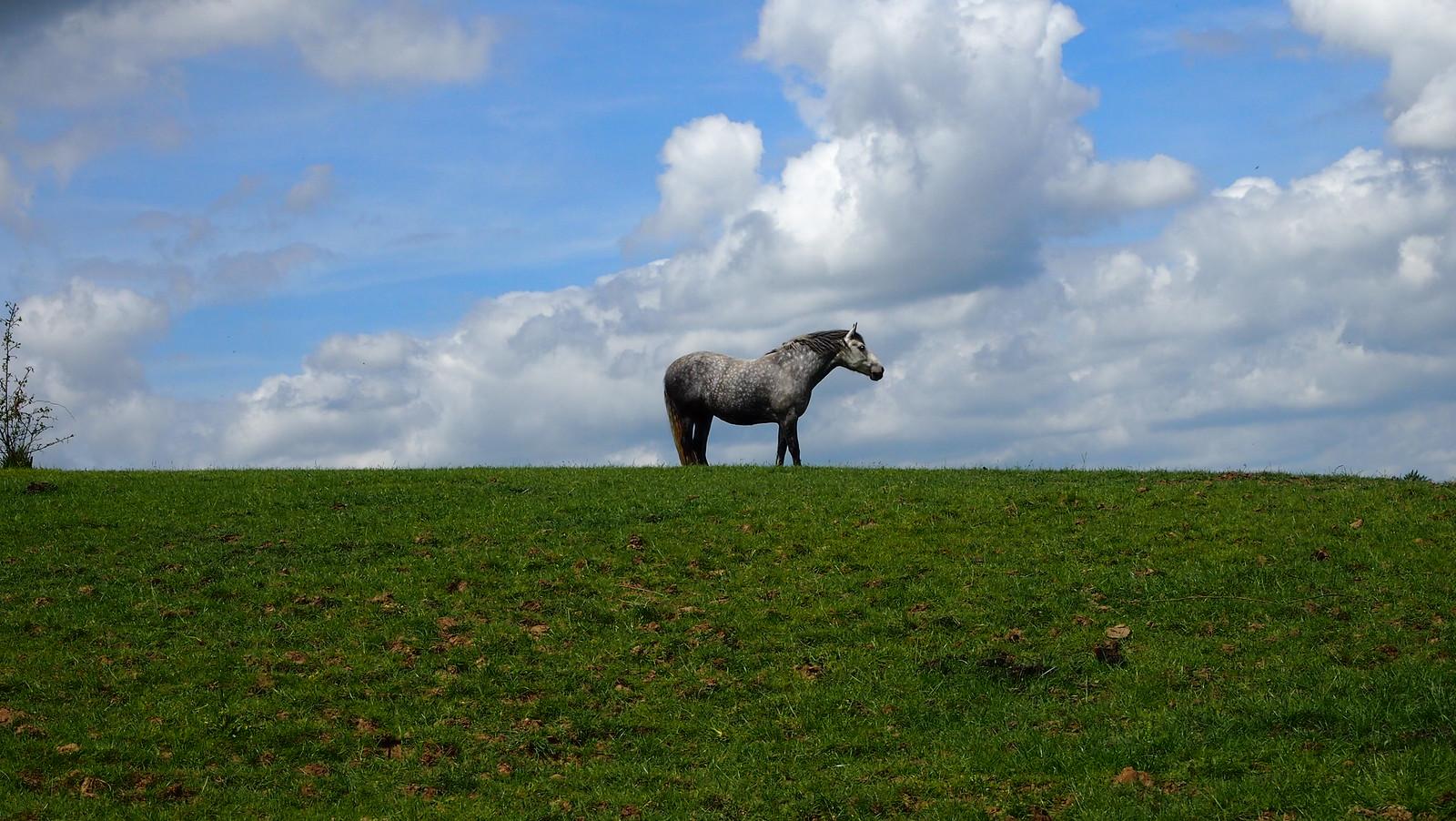 Horse OLYMPUS DIGITAL CAMERA