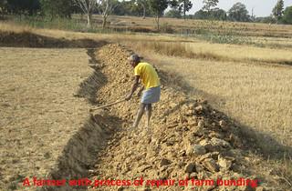 Proyecto Dalmadih (India) (2)