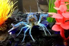 Mr.Blue