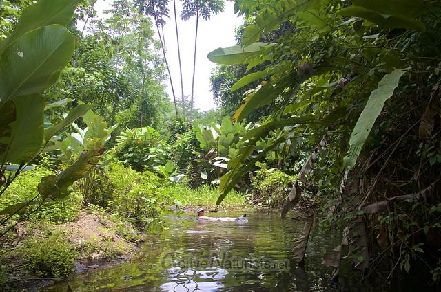naturist 0004 Corcovado, Costa Rica