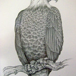 bald-eagle-by-susan-fabian