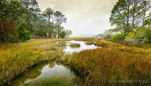marsh lowcountry seabrookisland sc fog texture kerstinfrank spartina