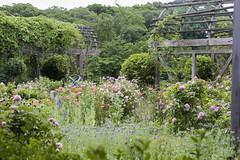 National Arboretum (39)