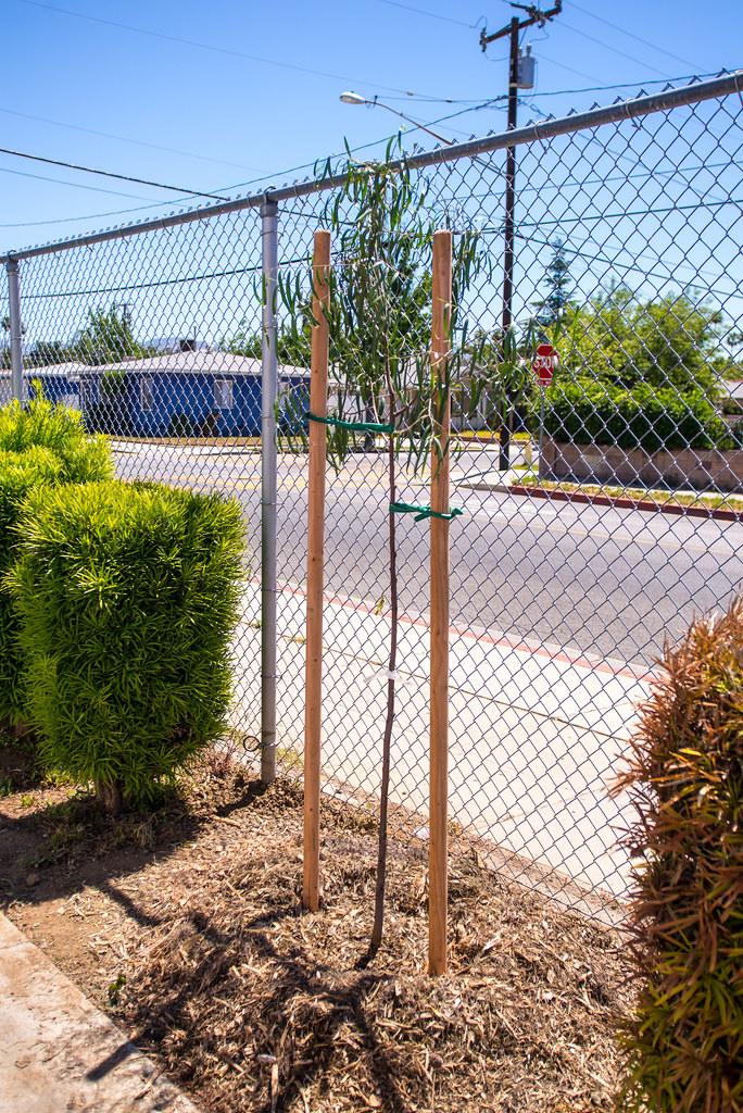 San Fernando Elementary Planting
