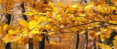 Blätter (2)