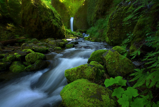 Mossy Grotto (Explored)