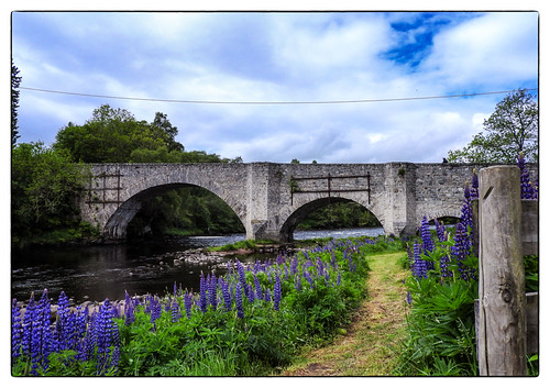 scotland unitedkingdom gb speysidewildlife rspbguildfordgroupholiday oldspeybridge grantownonspey bridge river lupins
