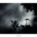 Excès de Z'ailes by Naska Photographie