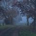 autumn fog by taraka26