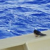 Our little #swift visitor #ships #shipping #captainjillsjourneys #gulfofmexico #GoM #bird #birdsofinstagram #birds
