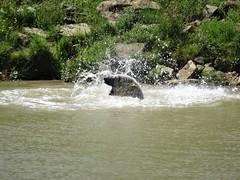 Nobby Splashing