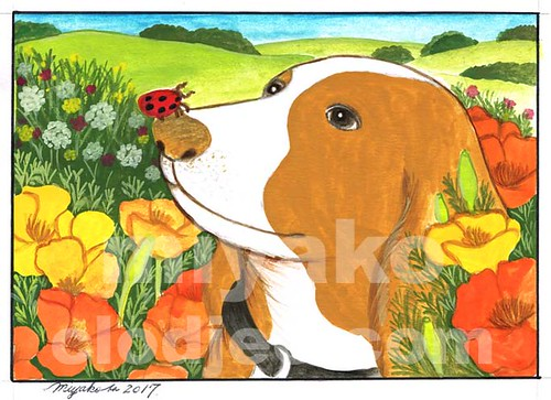 Dog with a Ladybug and Californian Poppies in the Countryside
