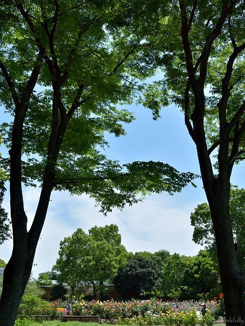 春の福岡市植物園