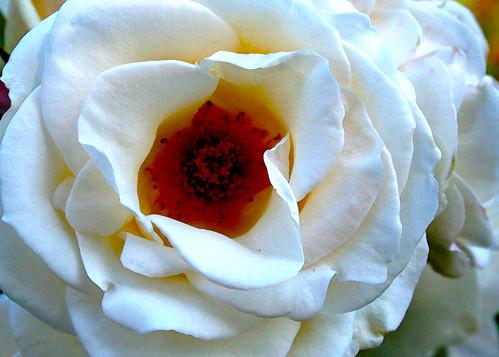 Flor | Flower | Fleur | Fiore | Blume | цветок