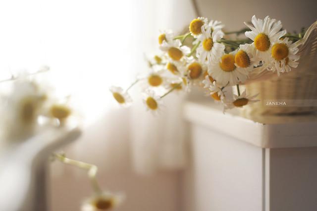 daisy forever <3