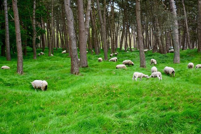 Former battlefield at Vimy Ridge