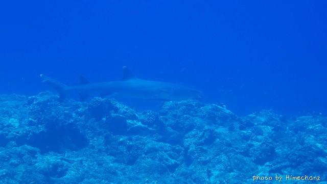 サメちゃん♪