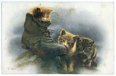 Postcard with image of three kittens, 3 August 1917