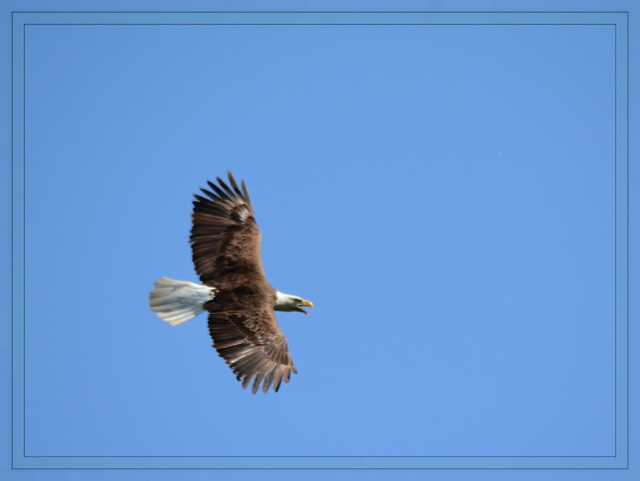 *** Wings On Blue - II. ***