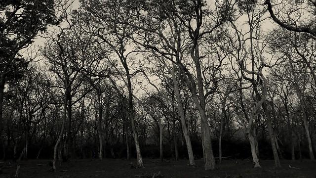 Mudumalai Forest::