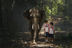 Student and elephants come back to home at elephant village.