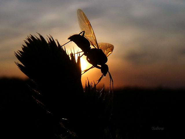 Bug Silhouette Explored 6-6-17, Fujifilm FinePix S1500