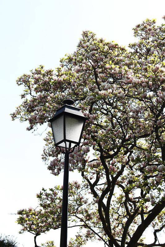 lampadaire et magnolia