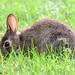 Burleson Bunny Breakfast