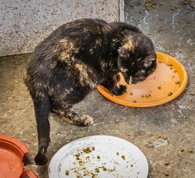 Home~~New Kittens  05/21/2017, Panasonic DMC-ZS8