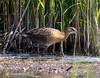 Andrew Aldrich has added a photo to the pool:2017 bird photoebird.org/ebird/view/checklist/S37505612