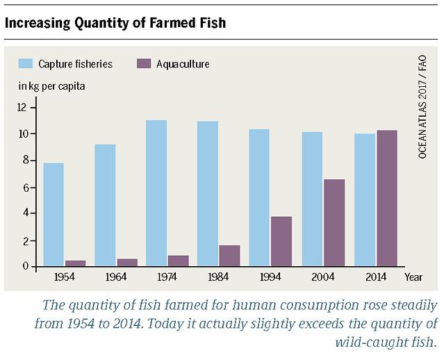 Capture fisheries and aquaculture in kg per capita Graph: Ocean Atlas 2017, Petra Böckmann/Heinrich Böll Foundation