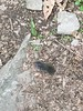 A mole on the trail