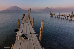Dog on jetty at dawn - volcano ringed Lake Atitlan, Guatemala