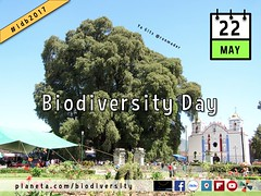 Celebrating Biodiversity Day on the Social Web 05.2017 #idb2017 #biodiversityday