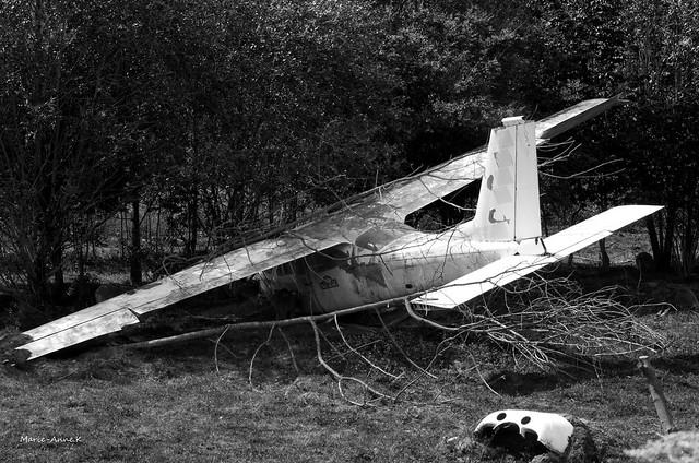 Un drôle d'oiseau, Pentax K-30, smc PENTAX-DA 55-300mm F4-5.8 ED