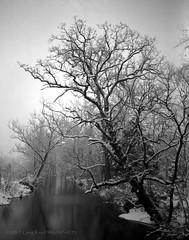 Snow scene from Bridge on Robin Dr  c. 1975
