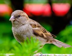 Sparrow, House  3 (1 of 1)