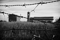 Barbed wire field