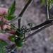 June 2017 polyculture garden update - 27