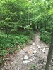 The trail was pretty decent near the start