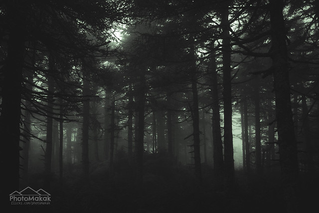The not so enchanted forest