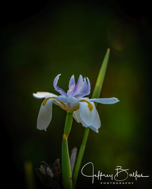 Garden Flowers, Sony ILCE-7M2, Sony 70-400mm F4-5.6 G SSM II (SAL70400G2)