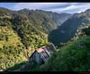 Madeira Farming II