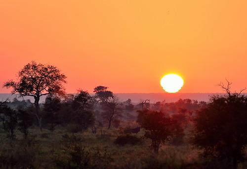 sunrise southafrica krugerpark krugernationalpark satara golden goldenhours africa winter morning dawn trees animal bluewildebeest satararestcamp sunsetsandsunrisesgold